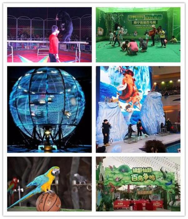 三明市本地鱼表演企鹅出租户外表演