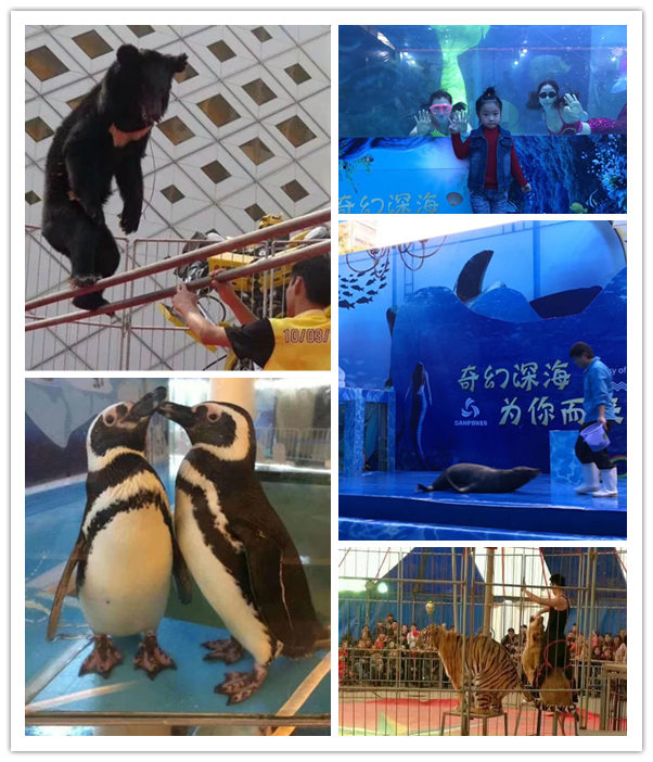 湘潭市海洋生物鱼缸展出租以客为尊