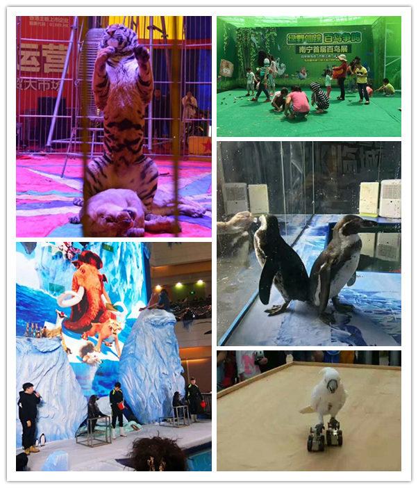 阳泉市周边城市同城海狮表演租赁
