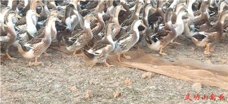 妙招壁纸鸟苍蝇450_207去动物鸟类图片