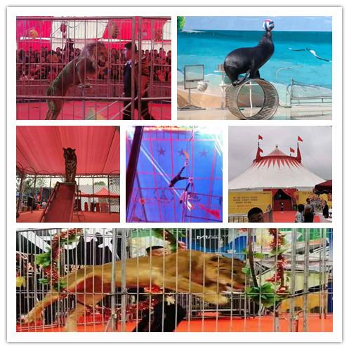 蚌埠市海洋生物展出租