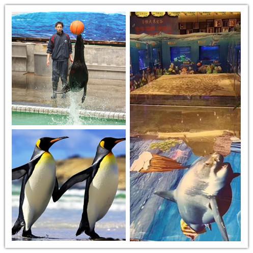 阜新市哪里有海狮表演出租