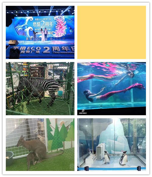 福鼎市什么地方有海狮表演出租