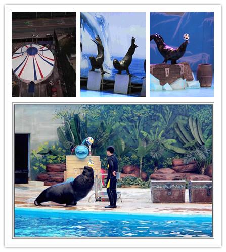 虎林市附近鹦鹉表演百鸟展租赁