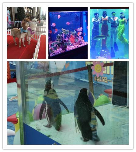 赣州本地出租动物马戏团表演