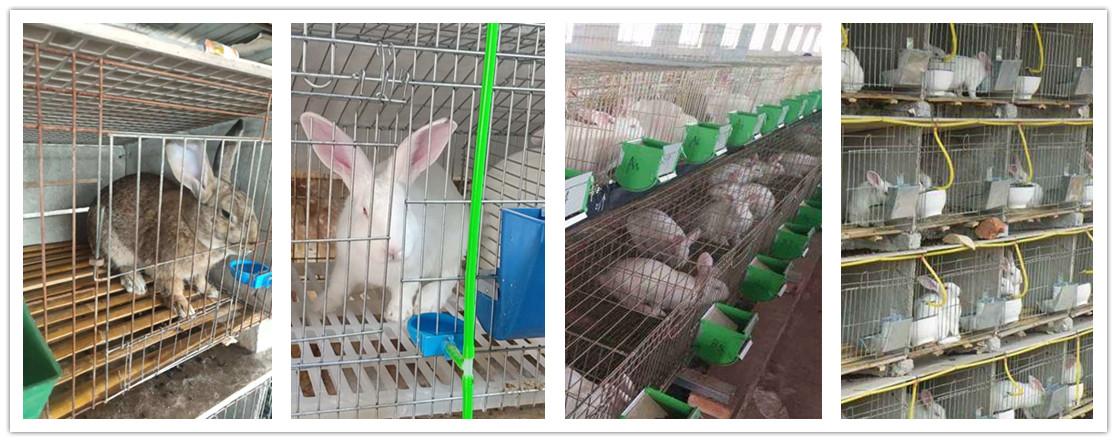 海林市附近有卖种兔的养殖场