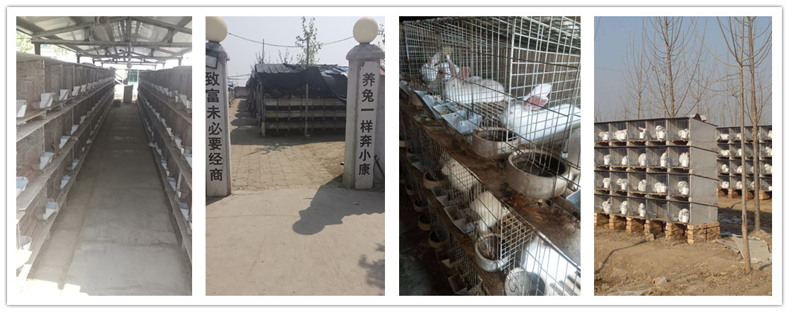 河南原阳市哪里有种兔养殖场