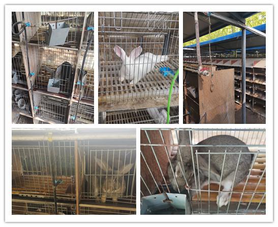 界首市正规种兔肉兔养殖基地