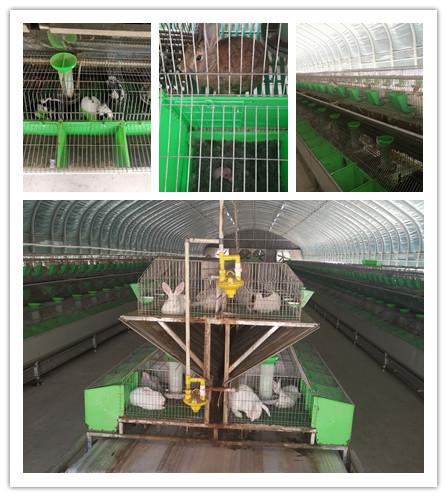 广东饶平市肉兔种兔养殖基地