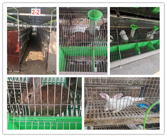 河南孟津市肉兔种兔养殖场
