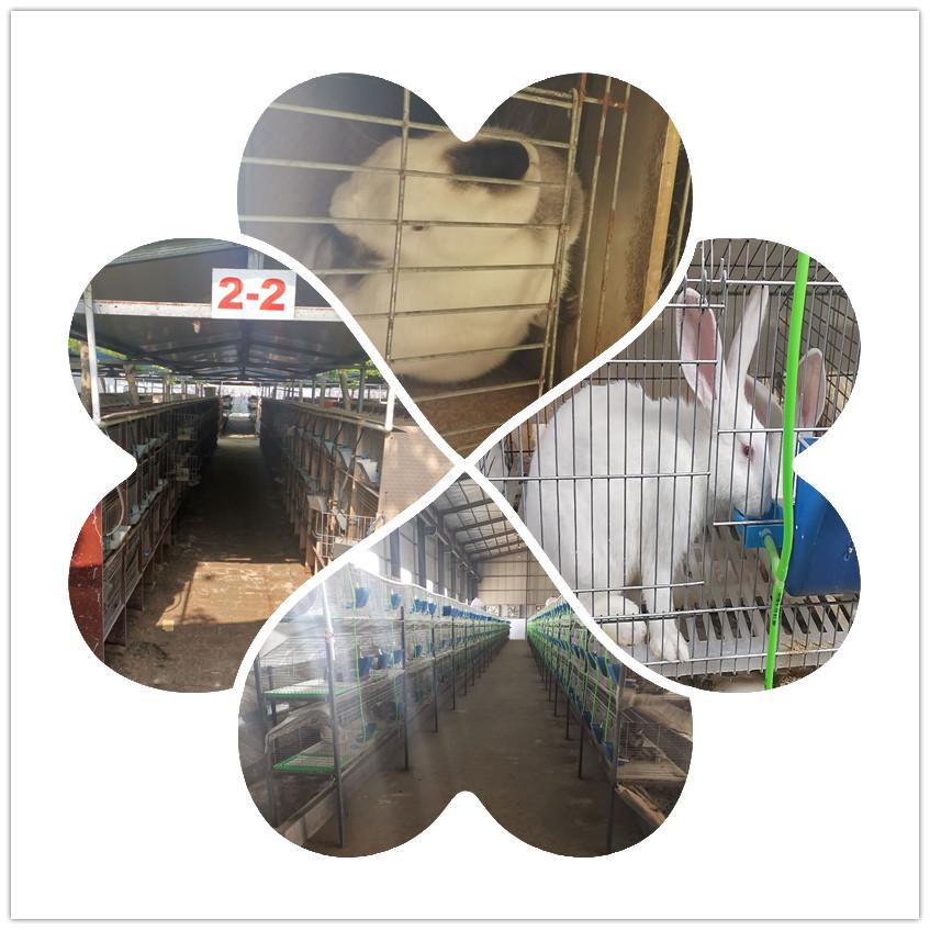福建永安市肉兔种兔养殖基地