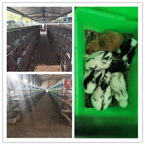 广东潮州市哪里有卖种兔的