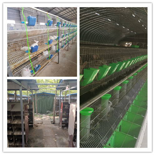 昆明市 肉兔种兔养殖场