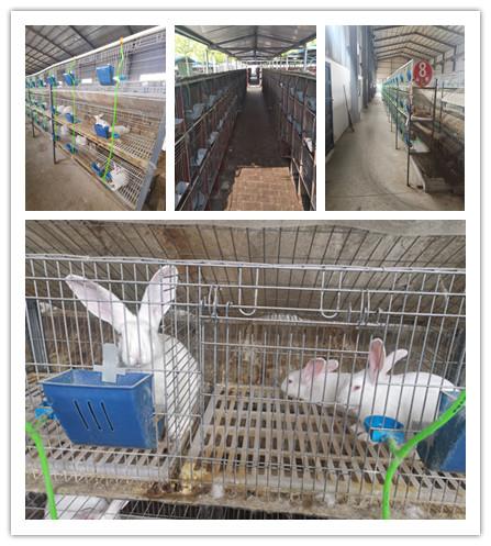 山东省文登市大型种兔养殖基地出售肉兔