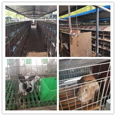 江苏徐州市獭兔种兔养殖场