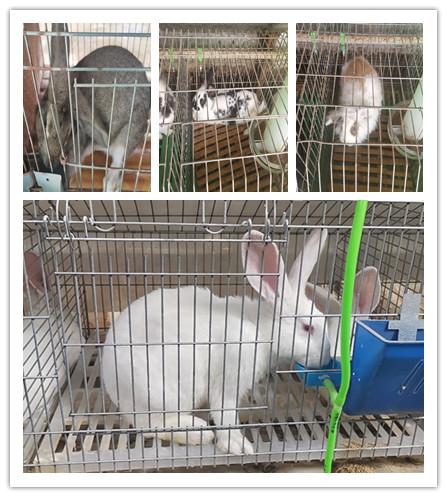 四川简阳本地的种兔养殖场一年利润