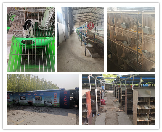 山东济南当地出售肉兔种兔多少钱一只