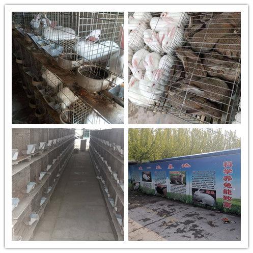 广东从化市哪里有卖肉兔的