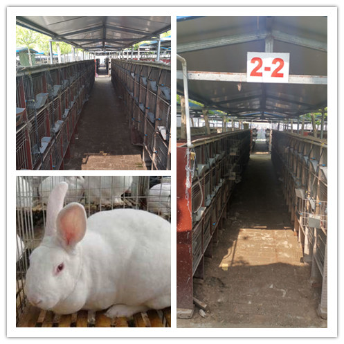 辽宁大洼县有没有卖种兔的