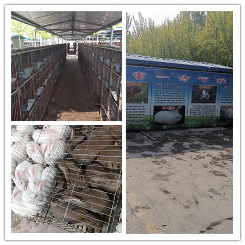 大洼县什么地方有种兔养殖场