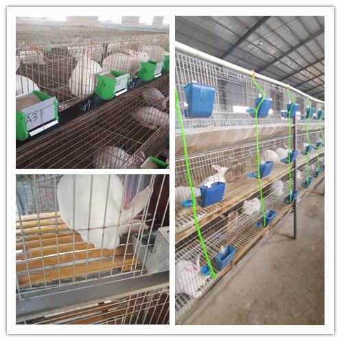 阿尔山市有没有新西兰种兔养殖场