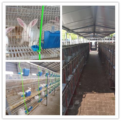 吉林长岭县哪里有卖种兔的