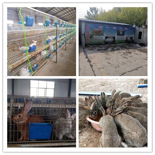 山东邹平县哪里有大型种兔养殖场