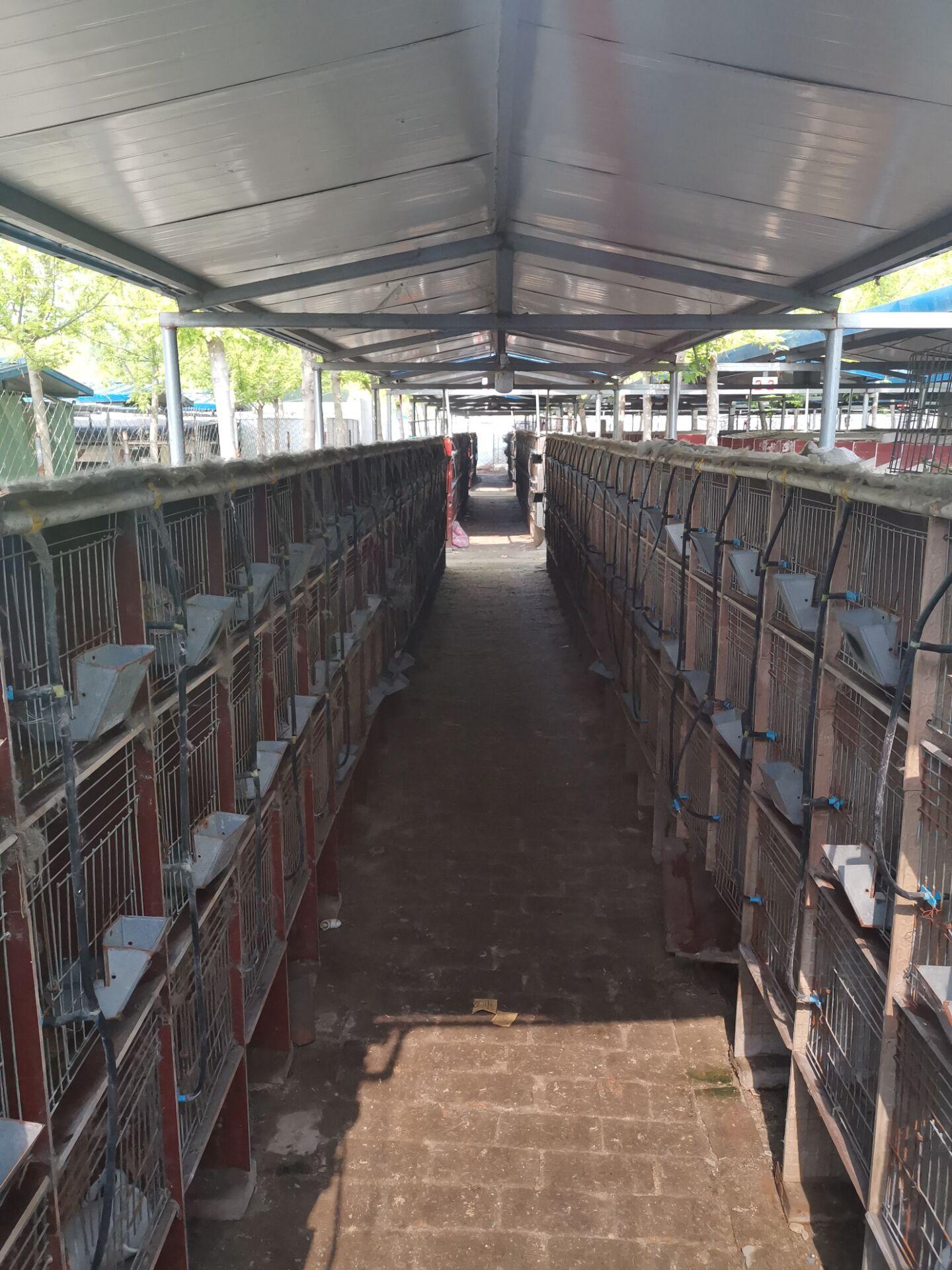 浙江富阳市兔子种兔养殖基地