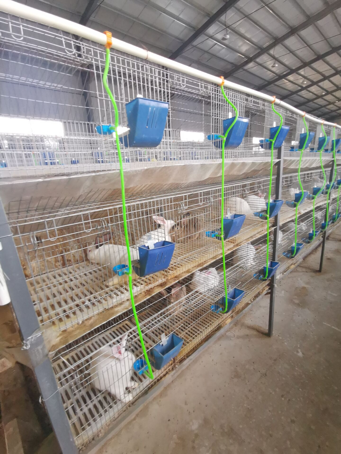 山东龙口市种兔养殖场哪里有