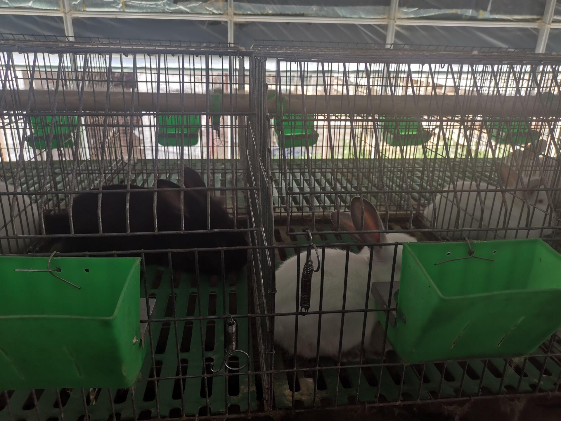 山西古交市肉兔种兔养殖基地