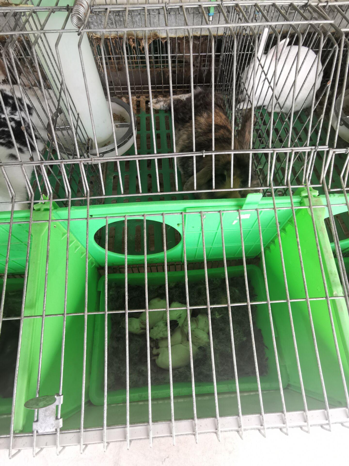 安徽天长市附近有卖种兔的养殖场