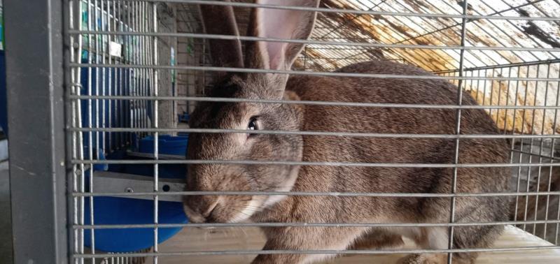 周口市种兔养殖场包回收