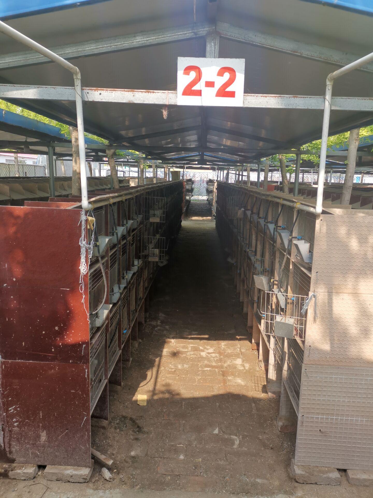 广东广宁市卖肉兔种兔的养殖场