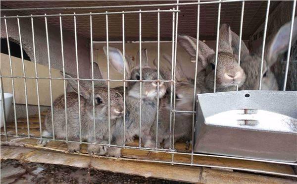 盘锦市种兔养殖场包回收