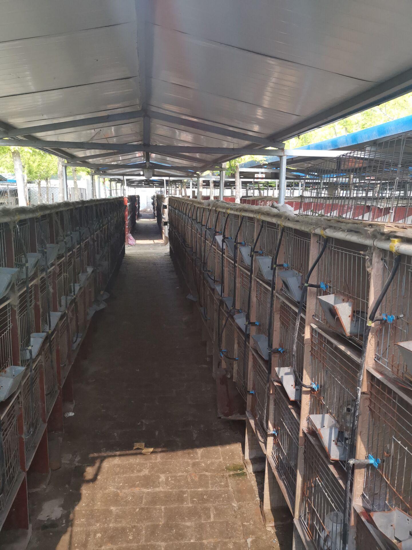 阿尔山市本地种兔养殖场
