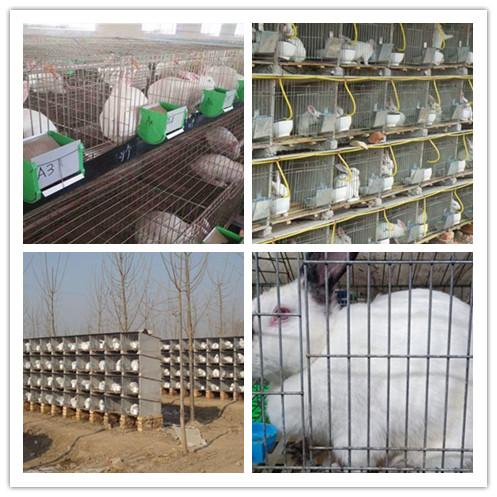 浙江义乌市卖肉兔种兔的养殖场