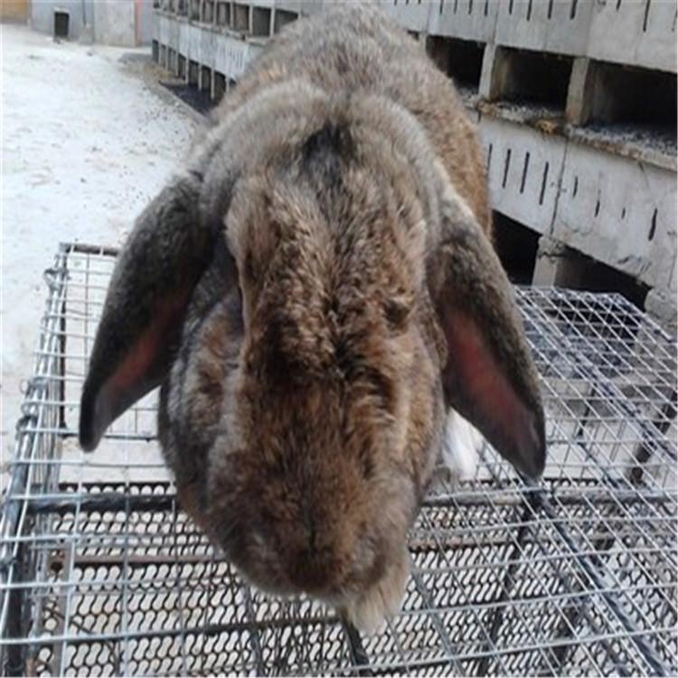 阿尔山市卖种兔的养殖基地