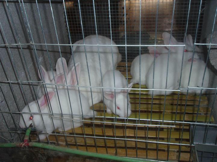 广东英德市哪里有种兔养殖场