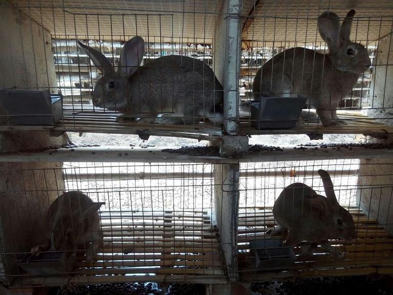 黑龙江黑河市种兔养殖场哪里有
