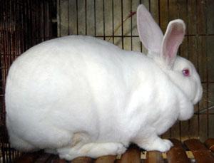 开原市种兔养殖场哪里有