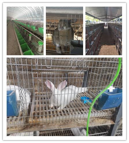 信阳市当地出售肉兔种兔的养殖场