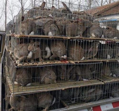 湖北宜城市种兔肉兔养殖基地
