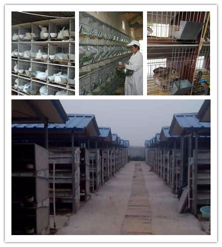 海林市卖种兔的养殖基地