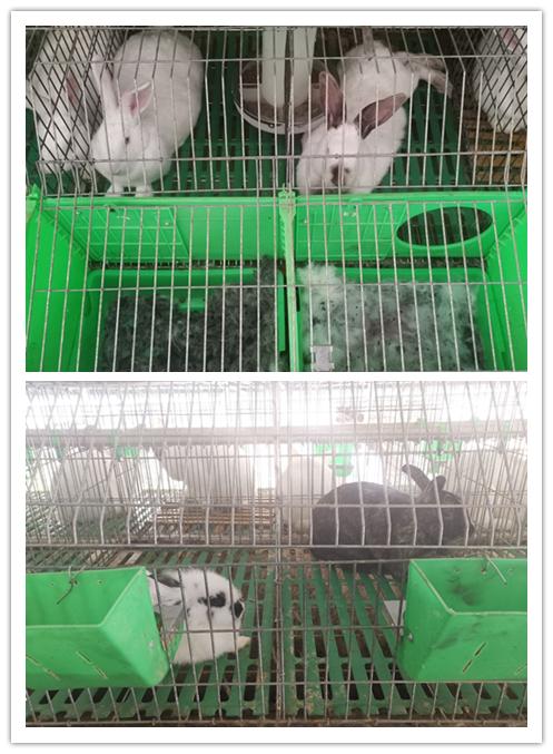 辽宁省盘山县当地卖肉兔种兔的养殖场