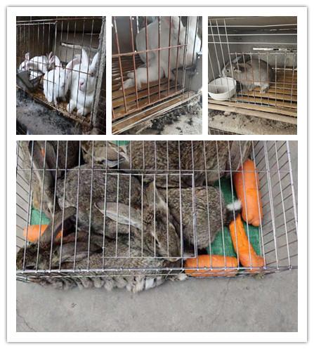 广西桂平市种兔肉兔养殖基地