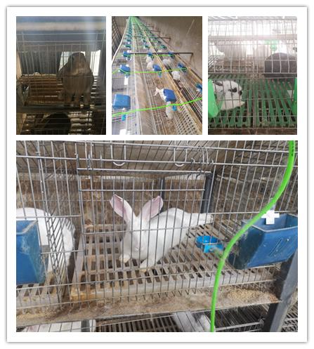 绥芬河市本地卖种兔的养殖基地