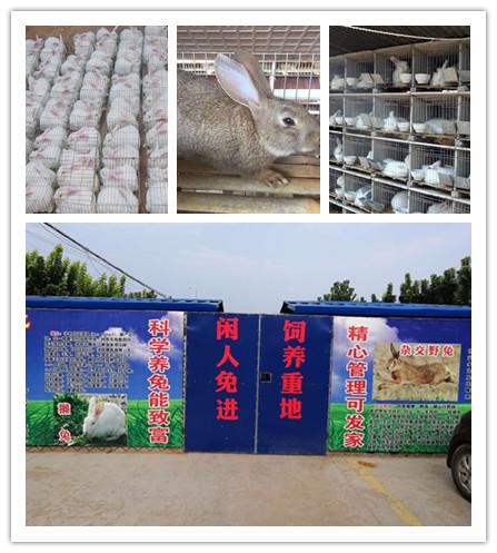 河南唐河市卖肉兔种兔的养殖基地