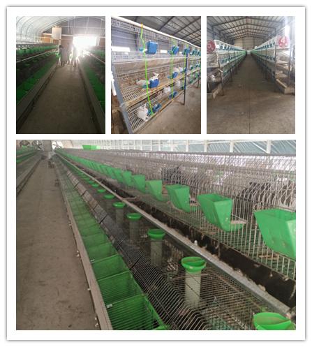 梧州市大型种兔肉兔养殖场