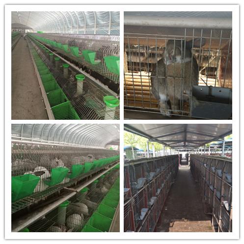 大冶市种兔养殖场电话