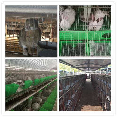 宁夏石嘴山市卖肉兔种兔獭兔的养殖场